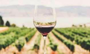 ΚΕΟΣΟΕ: Η εφοδιαστική αλυσίδα κρασιού υποφέρει υπό την πίεση του Covid-19