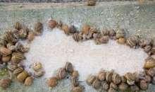 Οι δουλειές που δίνουν το «φιλί της ζωής» στους Έλληνες σαλιγκαροτροφείς