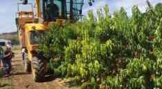 Καλλιέργεια Ροδακινιάς και Νεκταρινιάς - Όλες οι εργασίες με σύγχρονα μηχανήματα - Μάζεμα, αραίωμα, κ.α. (βίντεο)