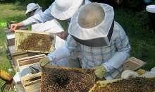 Προγράμματα Μελισσοκομίας έτους 2020