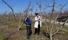 Παγετός: Δήλωση της Φρόσως Καρασαρλίδου για τις αποζημιώσεις των αγροτών της Ημαθίας