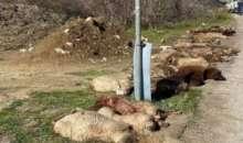 Αγροτικό παρέσυρε κοπάδι με πρόβατα