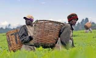 Αφρική: Αναγκαία η στροφή προς τη γεωργία