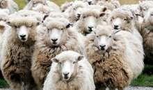 Ενημέρωση κτηνοτρόφων και μέτρα προφύλαξης για τον καταρροϊκό πυρετό του προβάτου